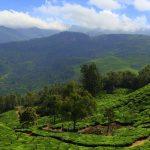 Indie: Kerala – trekking w Munnar pośród plantacji herbaty