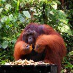 Malezja: Borneo – zwiedzamy stan Sarawak